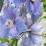 July_21_2015_garden_009