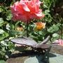 Garden 2010 more 012