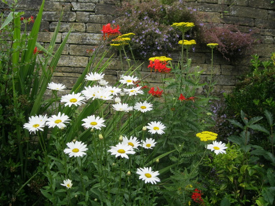 Achillea,and Daisies..