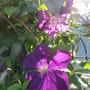 August_garden_2015_024