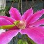 July_garden_2015_085