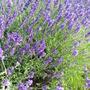 August_garden_2015_011