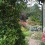 View through the arch into the side garden.