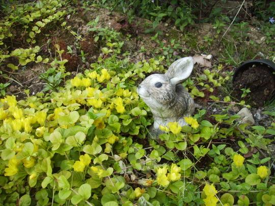 Creeping Jenny surrounding Bunny ornament 07.08 (Lysimachia nummularia)