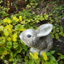 Rabbit Ornament surrounded by Creeping Jenny [Lysimachia nummeria] 07.08 (Lysimachia nummularia)