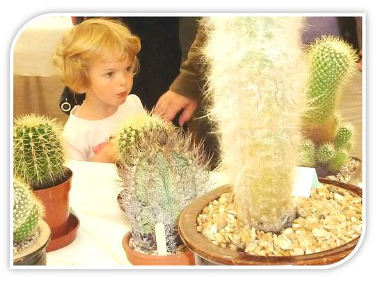 Young eyes amazed by the Cacti ...