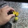 Runty Mangoes as sweet as largest. (Mangifera indica (Mango))