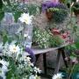 Summer_garden_2008_finn_and_popps_123