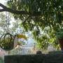 Toucan planter.