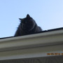 """roof"" us...."