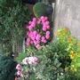 Front garden hydrangea.