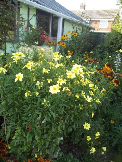 Plenty of colour in my garden still !
