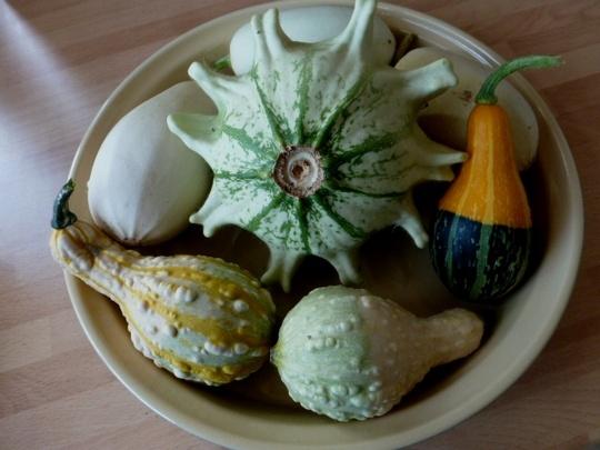 Gourds  ..