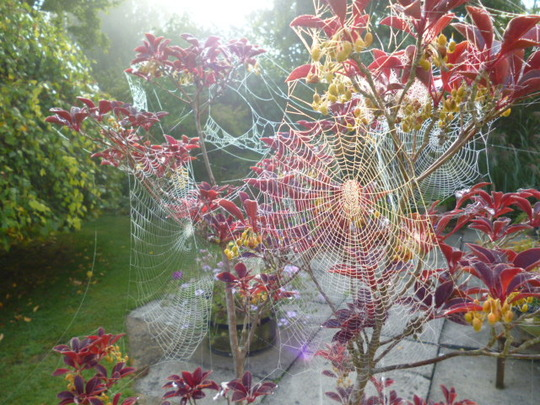 Spider's web close-up