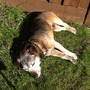 Paddy in The Garden...working hard!!!!!