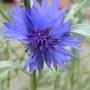 Scottish_wild_flower_1