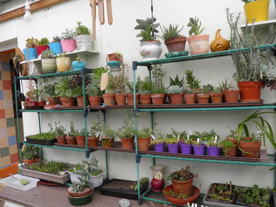 conservatory filling up