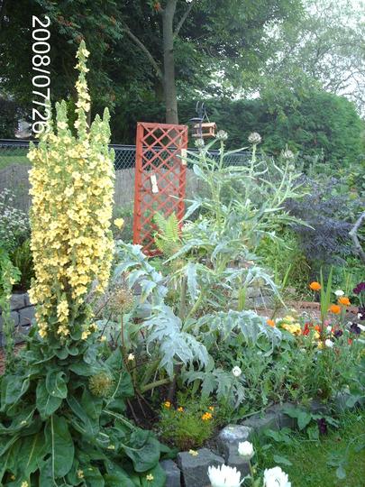 Big Plants for a Little Garden (Verbascum olympicum (Greek Mullein))