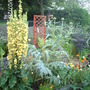 Big Plants for a Little Garden (Verbascum olympicum (Greek Mullein))