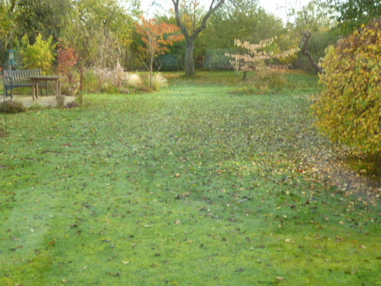 Leaves coming down like rain . . .
