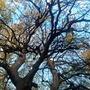 Autumn trees in Kelvingrove Park