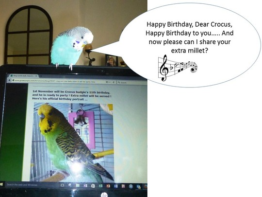 Happy Birthday, Crocus