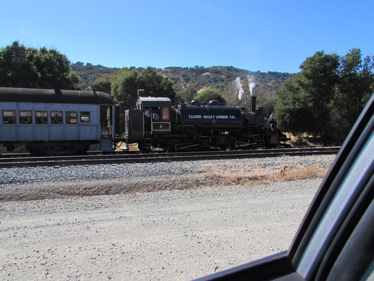 Old train still hauling people. (Quercus agrifolia (California Live Oak))