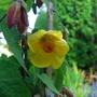 Apple Court Garden Close up flower shot (Yellow) Name unknown.jpg