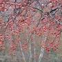 Rain Berries