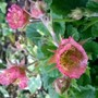 Geum. Bell Bank (hopefully)