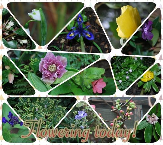 A walk around the garden today......