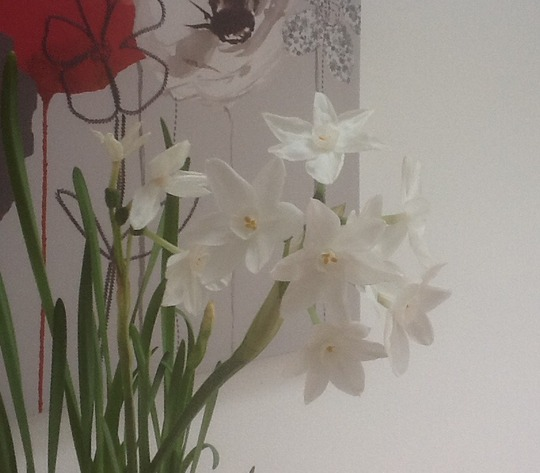 Loads of Scent ...Narcissus Paper White.