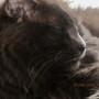 Rufus snoozing...