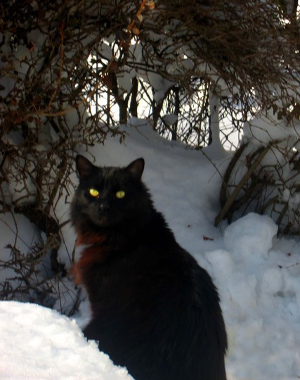 Costello Discovers Snow