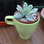 anyone for tea!
