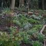 Woodland garden today