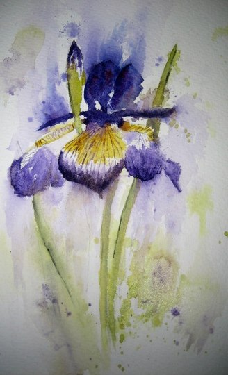Watercolour Iris