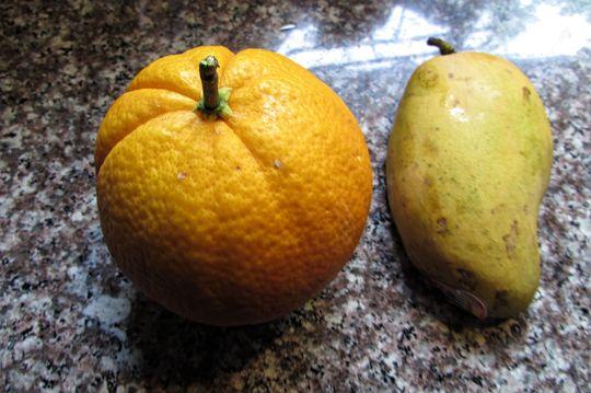 Home grown Oranges. (Citrus sinensis (Orange))