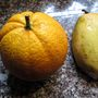 Home grown Oranges. (Citrus sinensis (Orange))