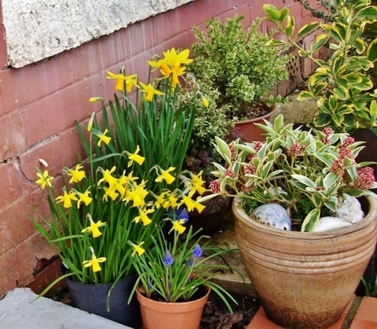 Spring bulbs by the front dor.