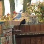 Two Of The Regular Visitors