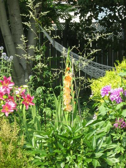 lilies, glads, dahlias