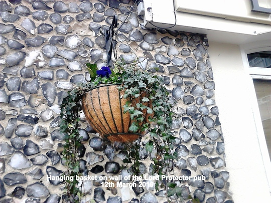 Hanging basket on wall of the Lord Protector pub 12 03 2016