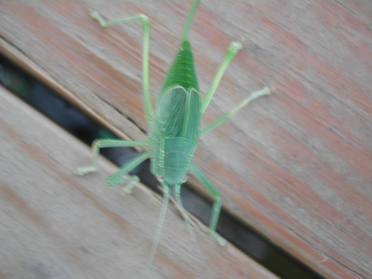 a bit blurry but look at this BUG