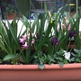 Spring in a window box