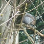 Seen in the trees at Allestree Park this morning