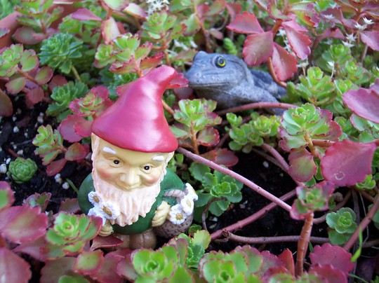 Wee Little Gnome