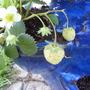 July_25th_garden_053