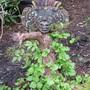 Mayan mask (Hydrangea petiolaris)