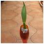Oh No, Alien Mist for my file (Iris germanica (Orris))